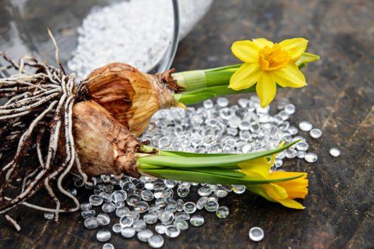 春の花壇に植える花(春植え球根)