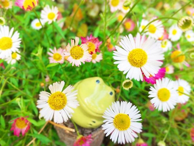 ヒメツルソバ(ポリゴナム/姫蔓蕎麦)〜花の育て方
