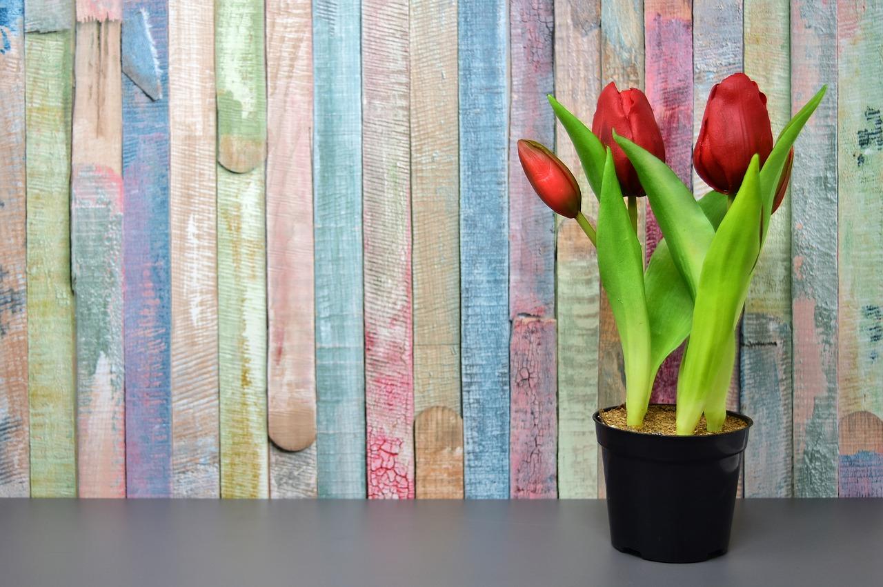 お庭を明るく彩る*春の花壇に植える花(春植え球根)
