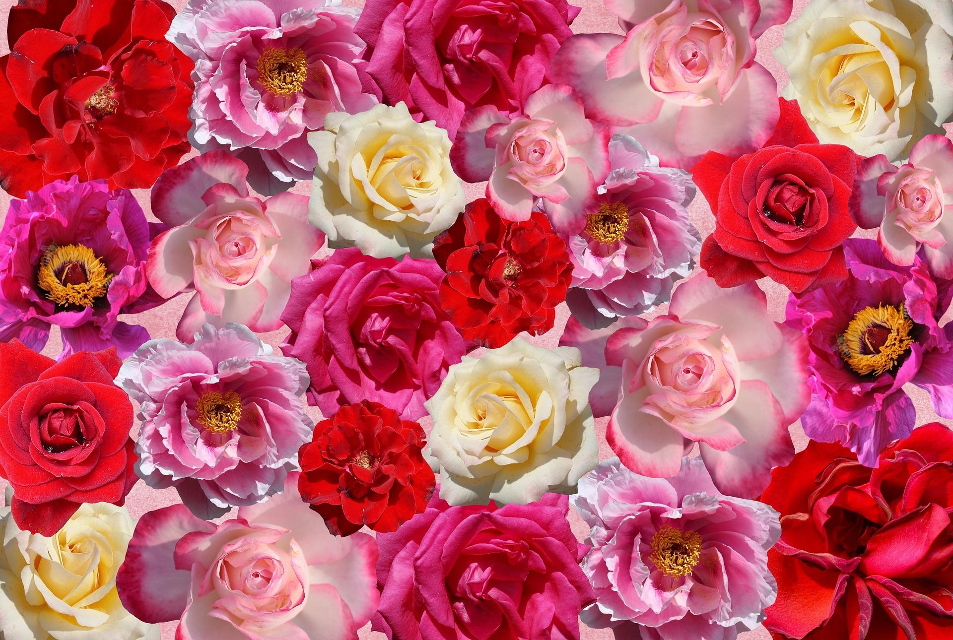 2018 国際バラとガーデニングショウ
